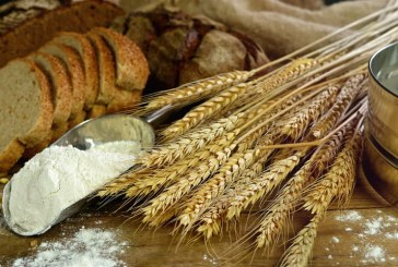 Танева: Очакваме около 5 млн. тона добив на зърно тази година