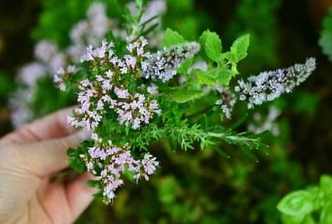 България е на първо място в ЕС по производство на билки и подправки
