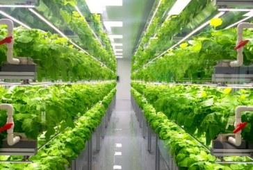 Вертикалното земеделие набира все по-голяма популярност