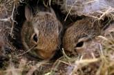 Разселването на дивите животни е необходимост