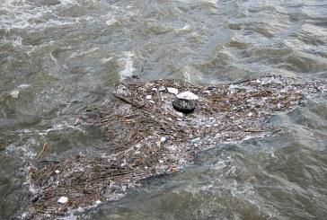 """Рибата в езерото """"Загорка"""" измира заради замърсяване на водата"""