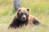 Турски пчелар използва мечки за дегустатори