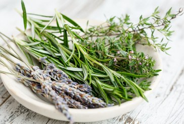 Как с растения да защитим дома си от насекоми