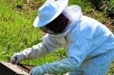"""120 млн. евро ще влязат в сектор """"Пчеларство"""""""