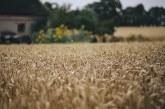 Най-много пшеница е засята в Добрич, Ямбол и Бургас