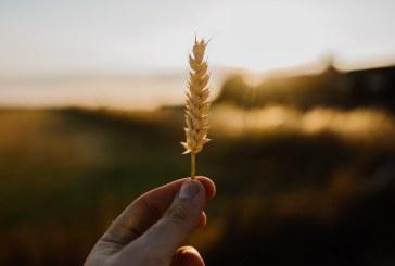 Проверяват дали непълнолетни си прибират реколтата в Кърджалийско
