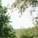 Селски кмет присвои чужди земеделски земи, за да получава субсидии