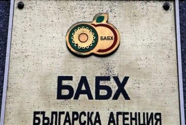"""Директорът на БАБХ: Няма риск от """"луда овца"""" в България"""
