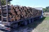 Горски инспектори задържаха тир с незаконна дървесина в Сливенско