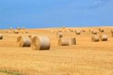 615 кг/дка е средният добив на пшеница в Силистренско