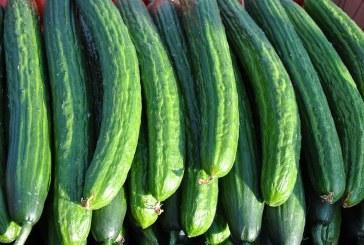 С 26% поскъпна цената на дребно на краставиците