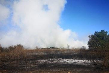 Експерти от РИОСВ – Варна провериха сигнал за изгаряне на растителни отпадъци в Каварна