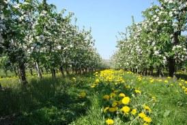 Как да обогатим почвата с органични вещества