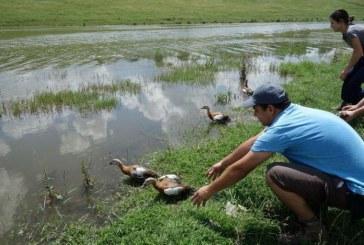 Търси се храна за защитен вид птица