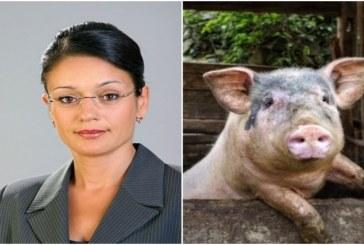 Уволниха служителка от Стара Загора, разпоредила всички да изколят прасетата си