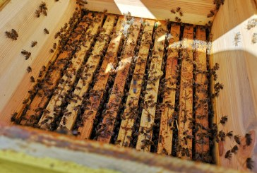 Какъв сезон очакват пчеларите в Силистренско и как им повлияха дъждовете