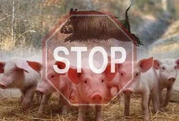 Спират проверките в свиневъдните стопанства в страната заради АЧС