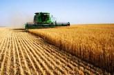 Единственият конкурентен сектор в българското земеделие е зърнопроизводството