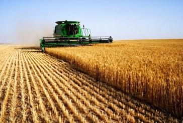 Как се промениха добивите на зърно за една година