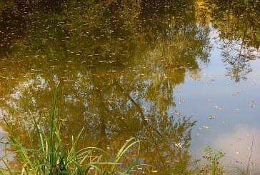 Търси се причината за тоновете мъртва риба в река Искър