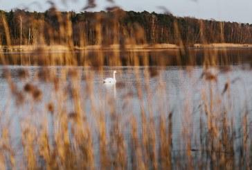 Мерки за подобряване на местообитанията на защитени птици ще бъдат представени на 20 август