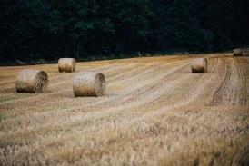 Заради ниските изкупни цени земеделските стопани задържат продажбата на зърно