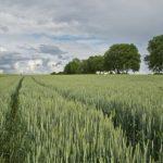 The New York Times: В България евросубсидиите са се превърнали в благосъстояние за земеделския елит