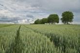 25% от заетите в област Велико Търново работят в сферата на земеделието
