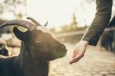 """Приключва приемът по мярка 14 """"Хуманно отношение към животните"""" от ПРСР 2014-2020 г."""