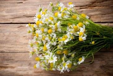 4-те билки, които ще Ви помогнат да бъдете в топ форма