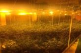 Ултрамодерна наркооранжерия бе разкрита при акция на криминалисти от ОДМВР-София