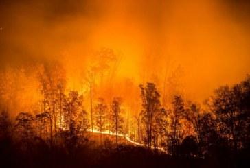 1,5 милиона хектара надхвърля площта на горските пожари в Сибир (ВИДЕО)