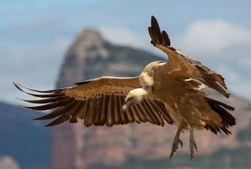 Полицията разследва смъртта на защитени птици