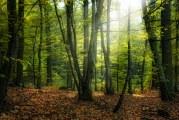 Продължава теренното оценяване на здравословното състояние на горите