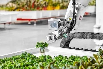 Как Китай целогодишно успява да осигури зеленчуци за 1,4 млрд. души