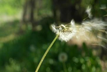 Слънчево време със силен вятър в планините