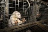 Протест иска забрана на фермите за кожи (СНИМКА)