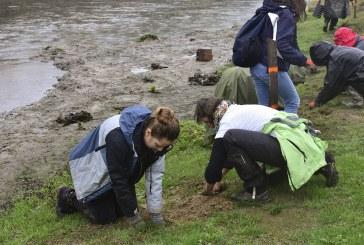 Положиха първите фиданки от новата гора край Марица