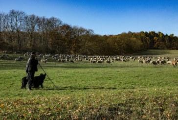 15 години затвор за фермер, пребил до смърт пастир в Пловдивско