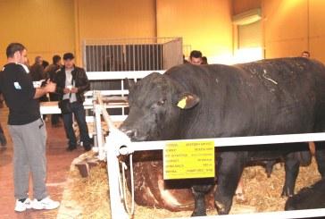 """Животновъдството е новият хит на Международната селскостопанска изложба """"Агра"""""""