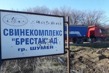 Определена е нова площадка за загробване на заразените 40 000 прасета в село Брестак, Варненско (СНИМКИ)