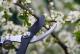 Как влияе резитбата върху растежа и развитието на дръвчетата