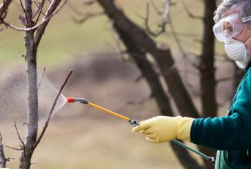 Късно зимно пръскане при овощните култури