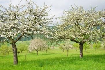 Следцъфтежни пръскания при костилкови овощни видове