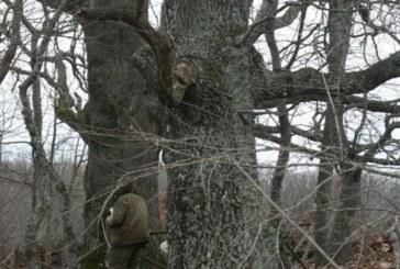 """Още 11 вековни дървета на територията на ПП """"Странджа"""" ще бъдат обявени за защитени"""