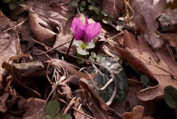 Провериха състоянието на находището на пролетно ботурче в Осенец