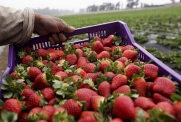 И договорите до 120 дни за прибиране на реколтата вече се предоставят онлайн