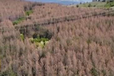 Ще унищожат ли вредителите гората над Благоевград (ВИДЕО)
