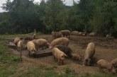 Стопанство край София произвежда и търгува с храни без разрешителни (СНИМКИ)