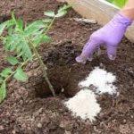 Захарта, солта и чесънът правят чудеса в градината